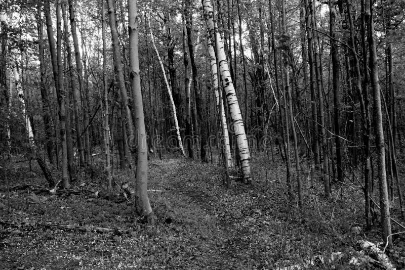 Η πορεία στο δάσος στοκ φωτογραφία με δικαίωμα ελεύθερης χρήσης