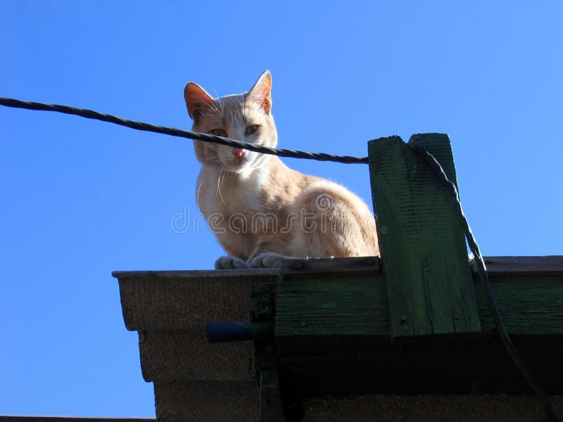 Η πορτοκαλιά γάτα κάθεται στη στέγη του γκαράζ στοκ φωτογραφία με δικαίωμα ελεύθερης χρήσης