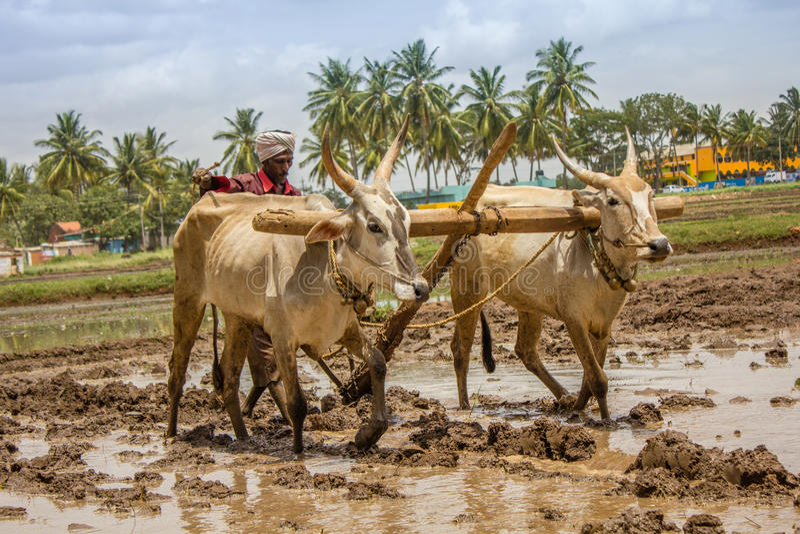 Η πολυάσχολη ινδική Farmer στοκ εικόνα με δικαίωμα ελεύθερης χρήσης