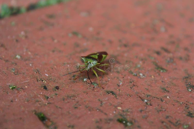 Η πράσινη ασπίδα στοκ εικόνα