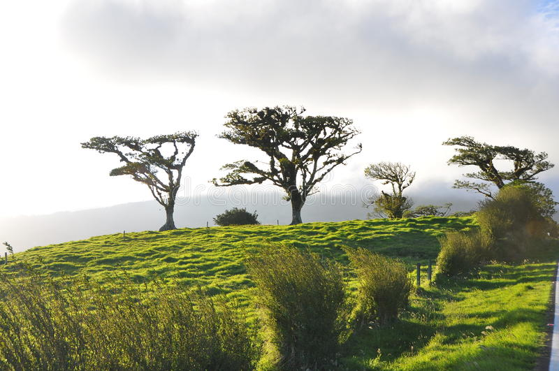 Η πράσινη κλίση 1 στοκ εικόνα