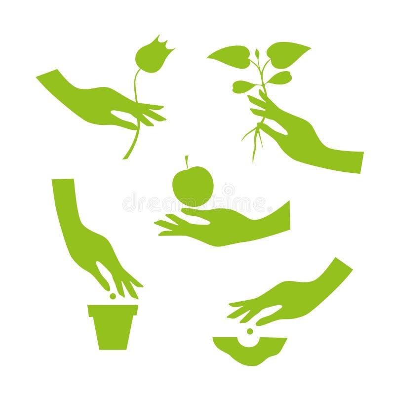 Η πράσινη σκιαγραφία του θηλυκού χεριού εκτελεί τις εργασίες κήπων εποχής διανυσματική απεικόνιση