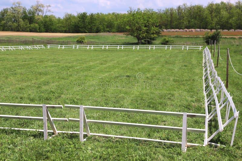 Η πράσινη χλόη κάλυψε τον ιππικό χώρο αλόγων στοκ εικόνες