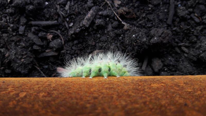 Η πράσινη Caterpillar στοκ φωτογραφίες