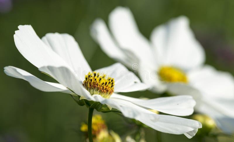 Η πριγκήπισσα των λουλουδιών στοκ εικόνες