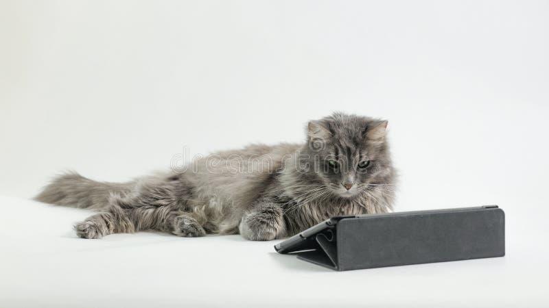 Η προσοχή γατών στην οθόνη στοκ φωτογραφία