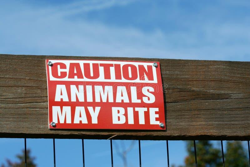 η προσοχή δαγκωμάτων ζώων μ&pi στοκ εικόνες