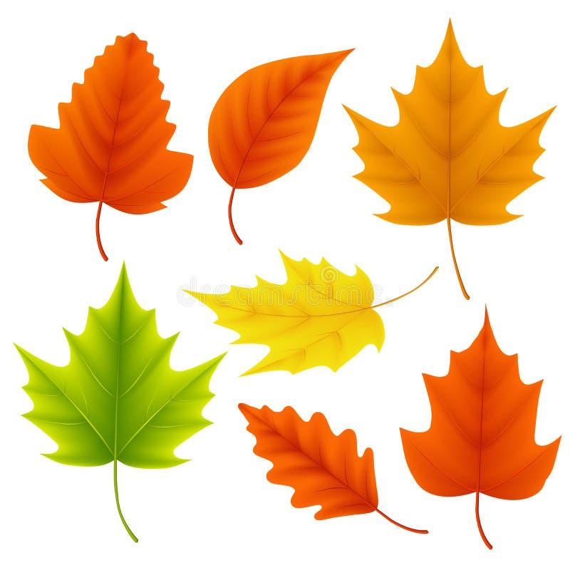 Η πτώση αφήνει το διανυσματικό σύνολο για την εποχή φθινοπώρου και τα εποχιακά στοιχεία με το σφένδαμνο και τη βαλανιδιά ελεύθερη απεικόνιση δικαιώματος