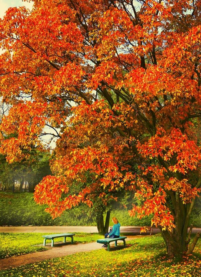 Η πτώση με τον πάγκο και το κορίτσι δέντρων λευκών στοκ φωτογραφία