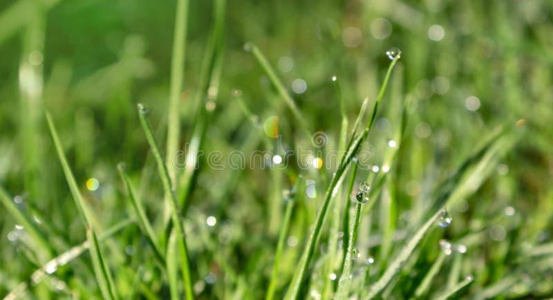 Η πτώση της δροσιάς σε μια πράσινη λεπίδα της χλόης, αναπηδά τη φρέσκια νέα χλόη στη δροσιά και τα σπινθηρίσματα των ακτίνων του  στοκ φωτογραφίες