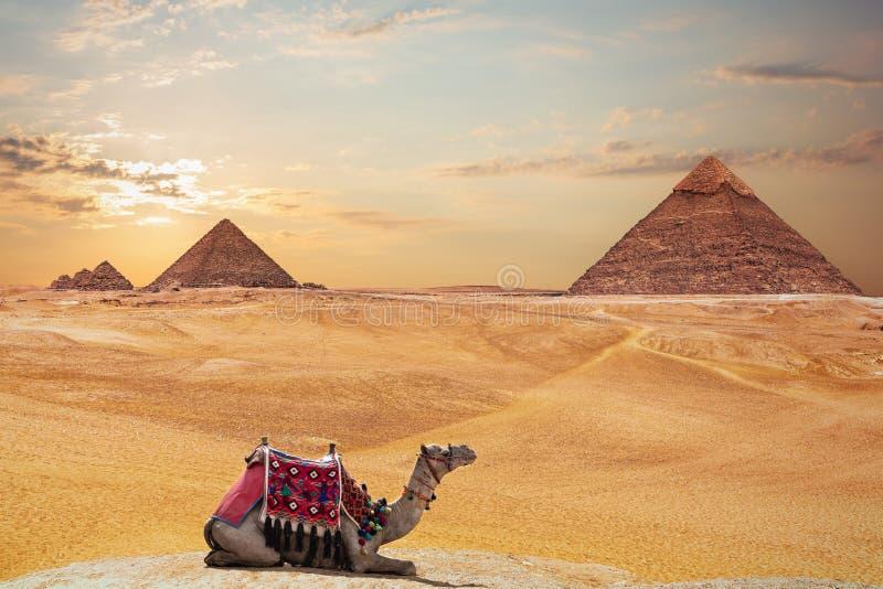 Η πυραμίδα Khafre και η πυραμίδα Menkaure και μιας καμήλας, Giza, Αίγυπτος στοκ εικόνες