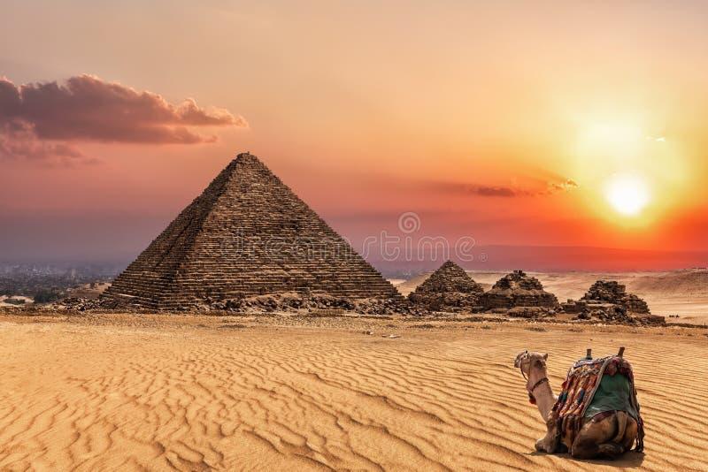 Η πυραμίδα Menkaure στο ηλιοβασίλεμα και μια καμήλα εδώ κοντά, Giza, Αίγυπτος στοκ εικόνα