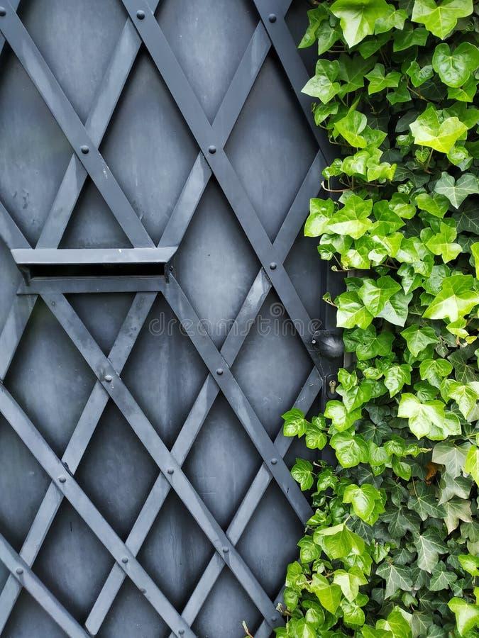 Η πόρτα μετάλλων συναντά την πρασινάδα στοκ εικόνα με δικαίωμα ελεύθερης χρήσης
