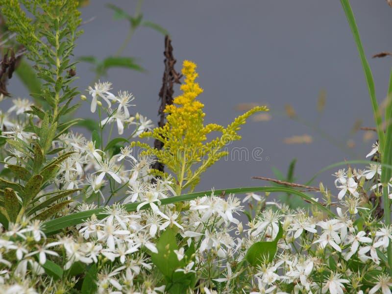 Η ρόδα χρώματος φύσης ` s λειτουργεί τις υπερωρίες με τη χρυσή ράβδο στοκ φωτογραφία με δικαίωμα ελεύθερης χρήσης