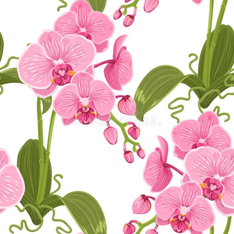 Η ρόδινη πορφυρή ορχιδέα phalaenopsis ανθίζει το σχέδιο ελεύθερη απεικόνιση δικαιώματος