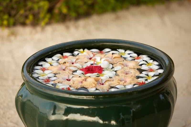 Η ρύθμιση λουλουδιών ντεκόρ στο πράσινο κύπελλο στο νερό του plumeria frangipani ανθίζει σύνθεση floristic Aroma spa στοκ εικόνα