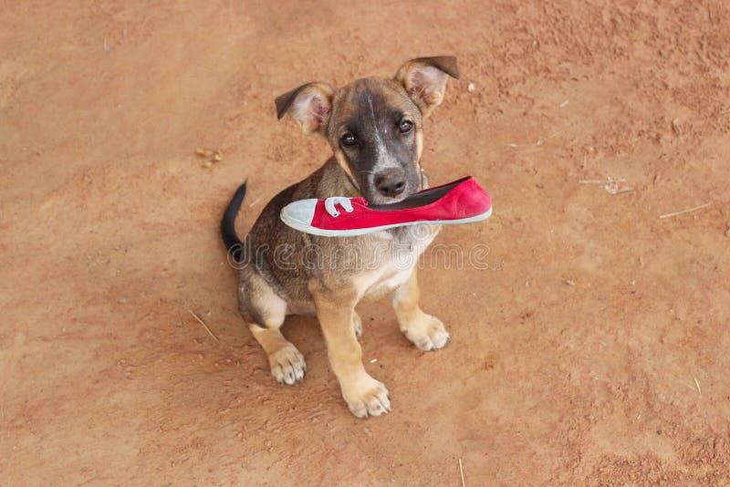 Η σελίδα παπουτσιών σκυλιών εκμετάλλευσης κρατά ότι ένα κόκκινο αυξήθηκε καφετιοί τόνοι στοκ εικόνα με δικαίωμα ελεύθερης χρήσης