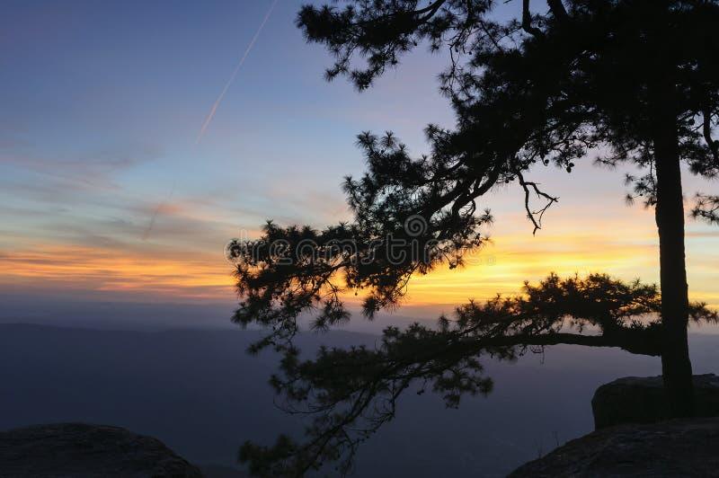 Η σκηνή σκιαγραφιών του δέντρου πεύκων στοκ εικόνα με δικαίωμα ελεύθερης χρήσης
