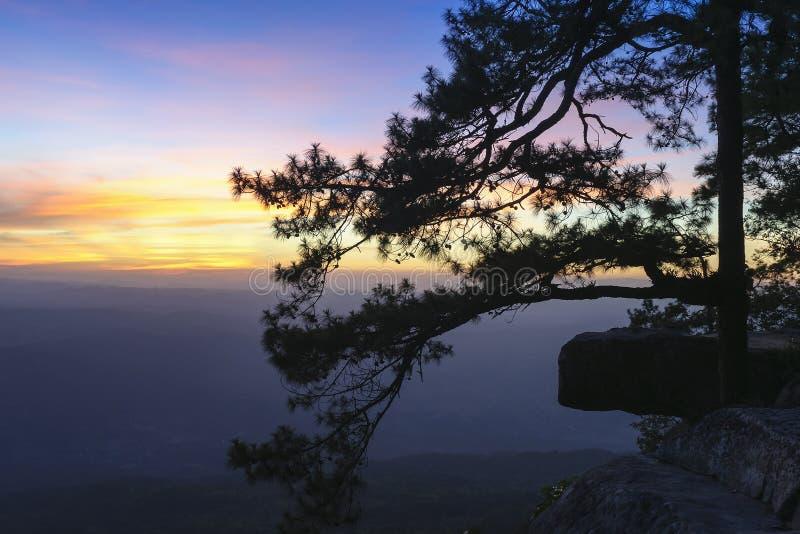 Η σκηνή σκιαγραφιών του δέντρου πεύκων στοκ φωτογραφίες