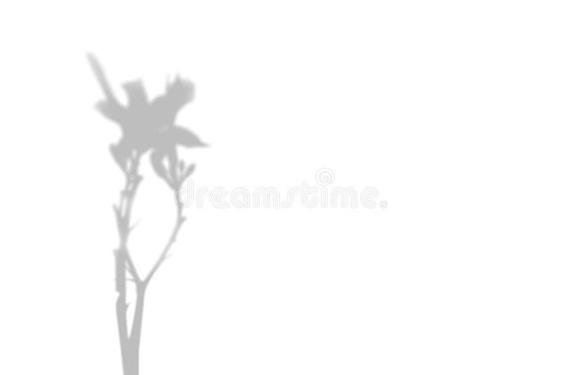 Η σκιά των εγκαταστάσεων στον άσπρο τοίχο Γραπτό θερινό υπόβαθρο για την επικάλυψη ή το πρότυπο φωτογραφιών ελεύθερη απεικόνιση δικαιώματος