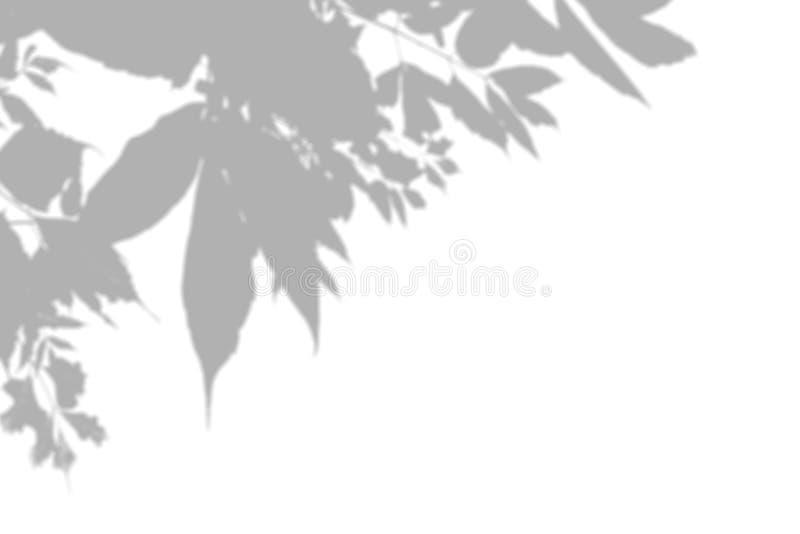 Η σκιά των εγκαταστάσεων στον άσπρο τοίχο Γραπτό θερινό υπόβαθρο για την επικάλυψη ή το πρότυπο φωτογραφιών απεικόνιση αποθεμάτων