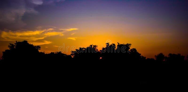 Η σκιαγραφία της κορυφής του δέντρου στο ηλιοβασίλεμα στοκ φωτογραφία