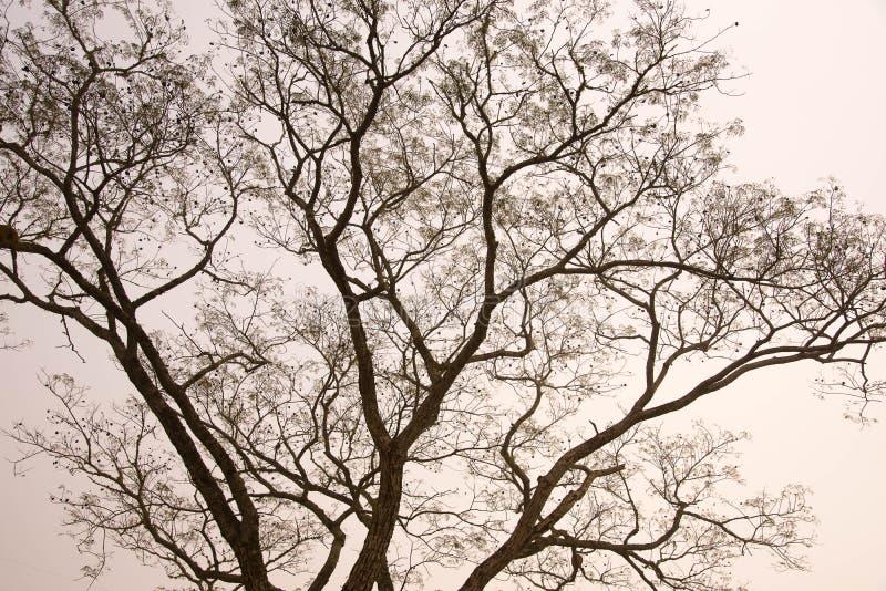 Η σκιαγραφία του δέντρου το πρωί ομίχλης στοκ φωτογραφίες