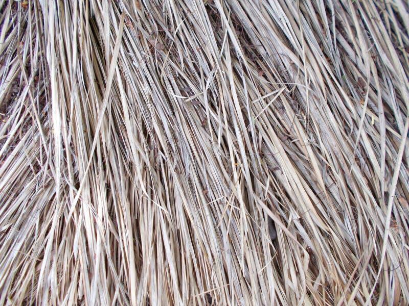 Η στέγη Thached που καλύφθηκε με το ξηρό άχυρο καλάμων σχέδια, λεπτομέρεια στοκ φωτογραφία