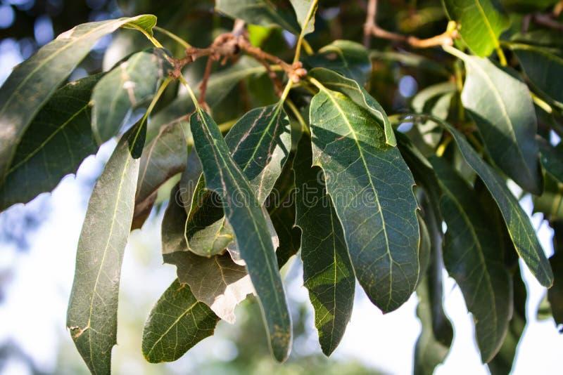 Η στιγμή ο ήλιος χτυπά τα πράσινα φύλλα στοκ φωτογραφία με δικαίωμα ελεύθερης χρήσης