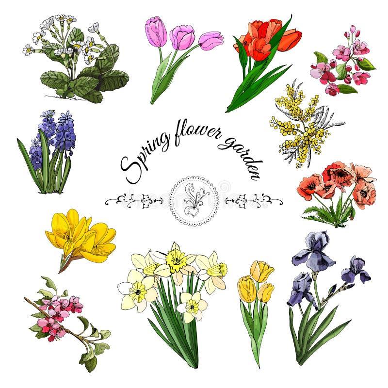 Η συλλογή του διαφορετικού ελατηρίου ανθίζει: τουλίπα, ίριδα, νάρκισσοι, malus, papaver, κρόκος, mimosa, muscari και primula απεικόνιση αποθεμάτων
