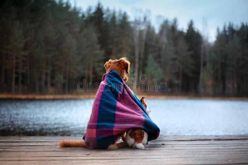 Η συνεδρίαση σκυλιών στην ακτή της λίμνης και κοιτάζει προς τα εμπρός στοκ φωτογραφίες με δικαίωμα ελεύθερης χρήσης