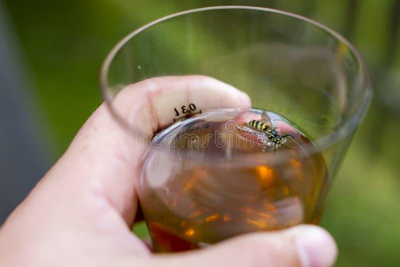 Η σφήκα περιήλθε σε ένα ποτήρι του ποτού, κίνδυνος στοκ φωτογραφία με δικαίωμα ελεύθερης χρήσης