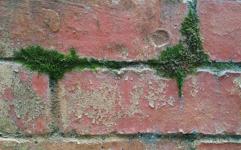 Η σύσταση ενός mossy, shabby τουβλότοιχος στοκ εικόνες με δικαίωμα ελεύθερης χρήσης