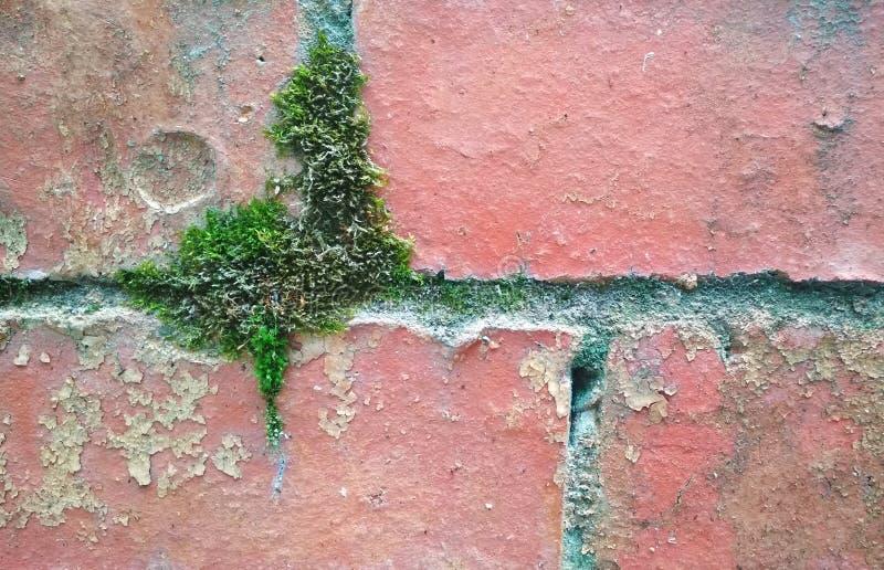 Η σύσταση ενός mossy, shabby τουβλότοιχος στοκ φωτογραφίες με δικαίωμα ελεύθερης χρήσης