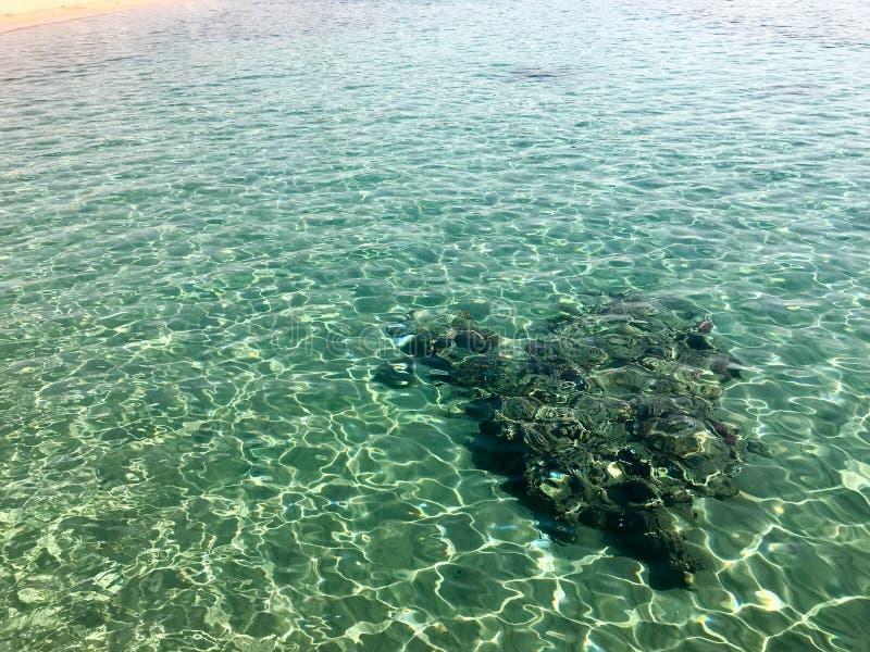 Η σύσταση της υποβρύχιας πέτρας, το κοράλλι στο υπόβαθρο μιας διαφανούς θερμής θάλασσας του σαφούς, καμμένος πράσινου νερού στοκ εικόνα