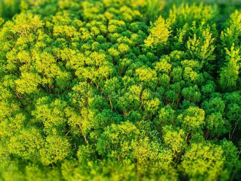 Η σύσταση του δάσους, η τοπ άποψη στοκ φωτογραφία με δικαίωμα ελεύθερης χρήσης