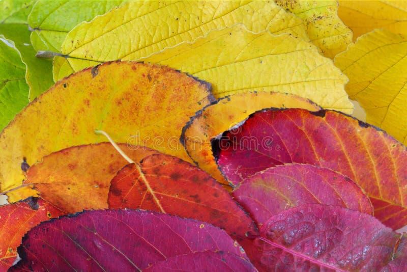 Η σύσταση υποβάθρου που γίνεται από το ζωηρόχρωμο φθινόπωρο βγάζει φύλλα στοκ εικόνες