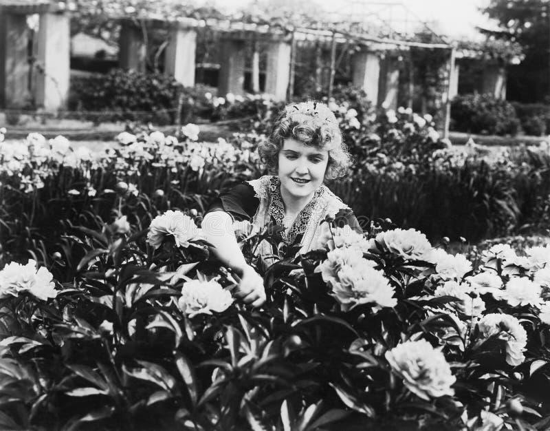 Η τάση γυναικών ανθίζει στον κήπο (όλα τα πρόσωπα που απεικονίζονται δεν ζουν περισσότερο και κανένα κτήμα δεν υπάρχει Εξουσιοδοτ στοκ φωτογραφία με δικαίωμα ελεύθερης χρήσης