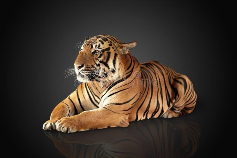 Η τίγρη έχει ένα υπόλοιπο στοκ φωτογραφία με δικαίωμα ελεύθερης χρήσης