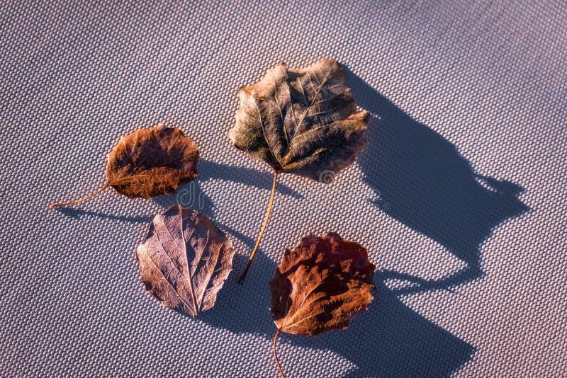 Η ταπετσαρία υποβάθρου με πεσμένος βγάζει φύλλα του φθινοπώρου στοκ φωτογραφία