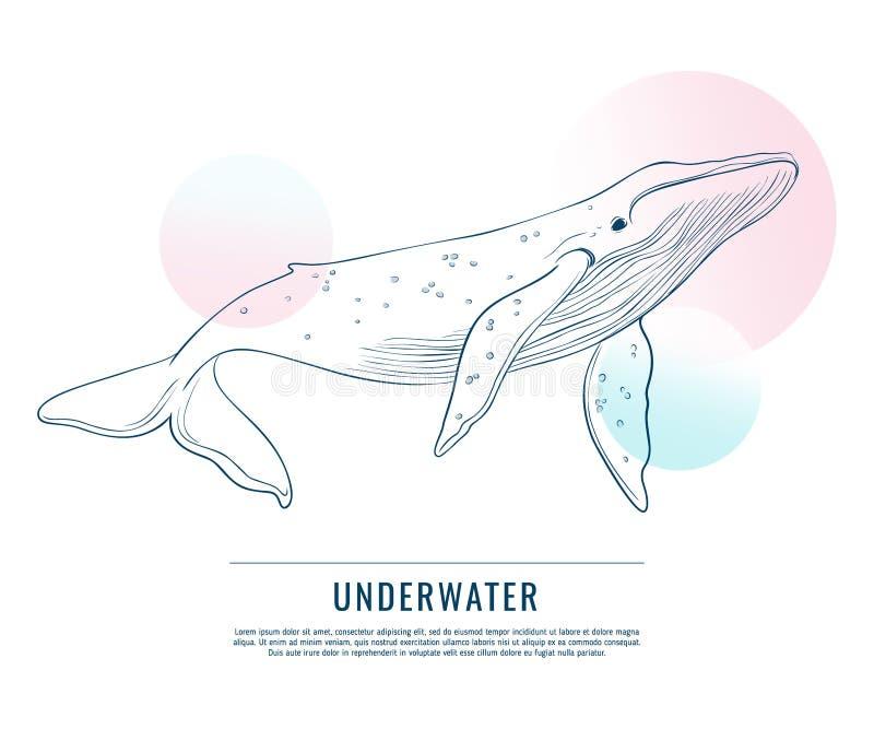 Η τεράστια φάλαινα με την αντίθεση περιβάλλει doodle την τέχνη Διανυσματικό advrtising σκίτσο Humpback με την μπλε αφηρημένη γραφ ελεύθερη απεικόνιση δικαιώματος