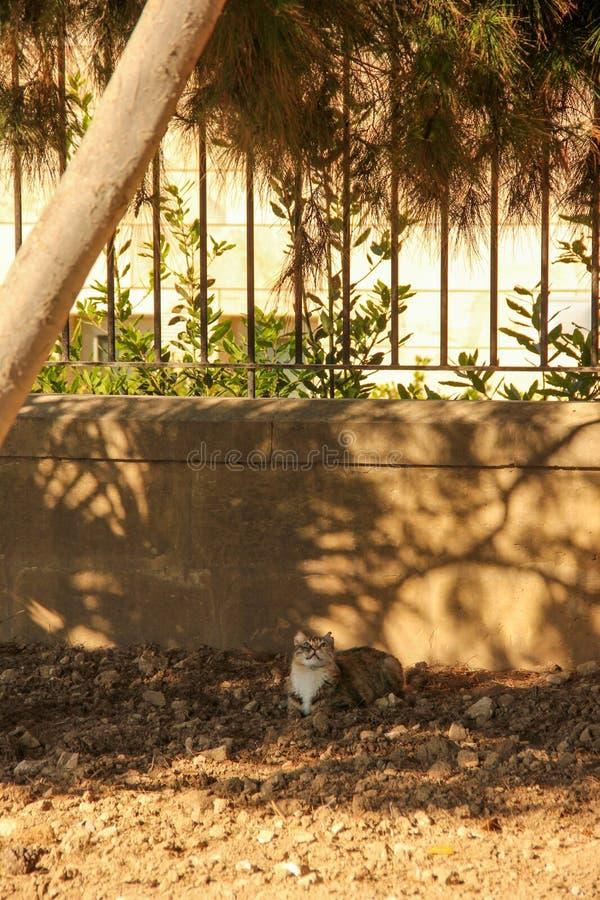 Η τιγρέ γάτα φαίνεται επάνω και βάζει στο έδαφος στο πάρκο στοκ εικόνες