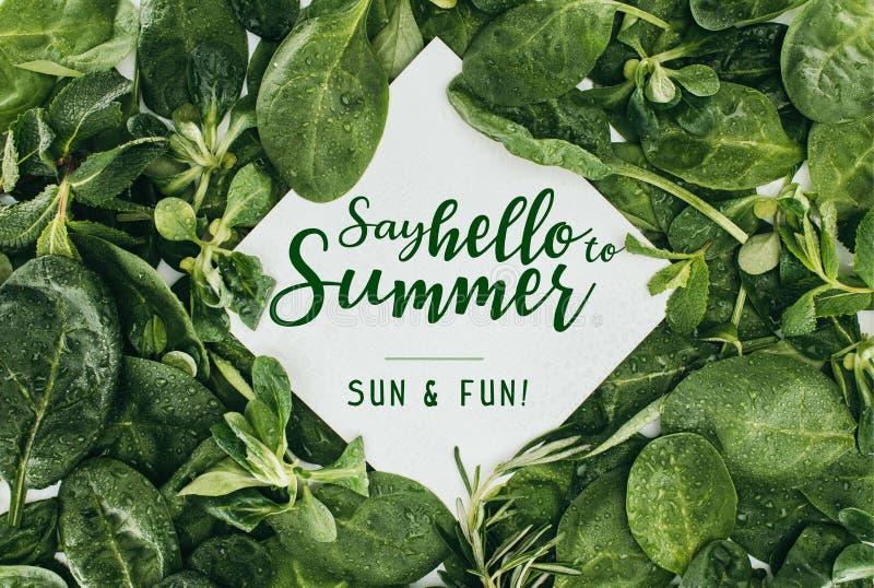 η τοπ άποψη της άσπρης κάρτας με τις λέξεις λέει γειά σου στο καλοκαίρι και όμορφο υγρό πράσινο διανυσματική απεικόνιση