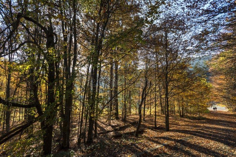 η τράπεζα φθινοπώρου χρωματίζει το γερμανικό δέντρο ποταμών του Ρήνου κίτρινο στοκ φωτογραφίες