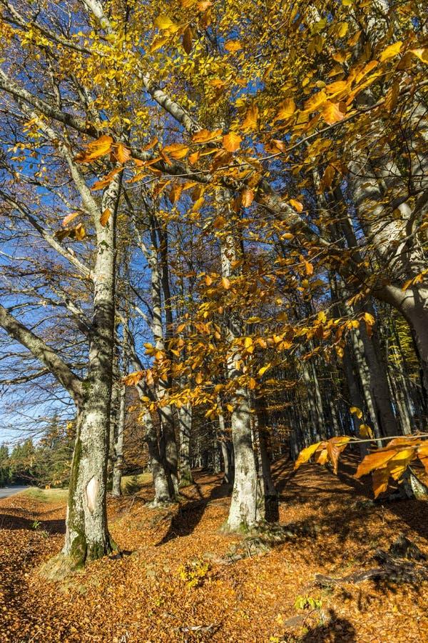 η τράπεζα φθινοπώρου χρωματίζει το γερμανικό δέντρο ποταμών του Ρήνου κίτρινο στοκ φωτογραφία