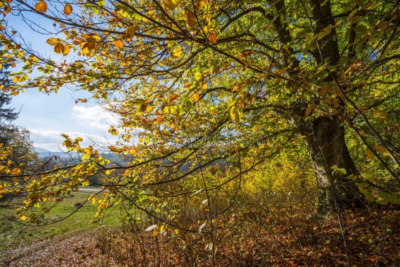 η τράπεζα φθινοπώρου χρωματίζει το γερμανικό δέντρο ποταμών του Ρήνου κίτρινο στοκ εικόνα με δικαίωμα ελεύθερης χρήσης