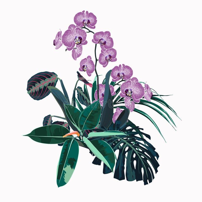 Η τροπική ορχιδέα ανθίζει, φύλλα φοινικών, φύλλο ζουγκλών, ficus και monstera ελεύθερη απεικόνιση δικαιώματος