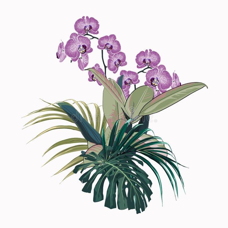 Η τροπική ορχιδέα ανθίζει, φύλλα φοινικών, φύλλο ζουγκλών, monstera και ficus διανυσματική απεικόνιση
