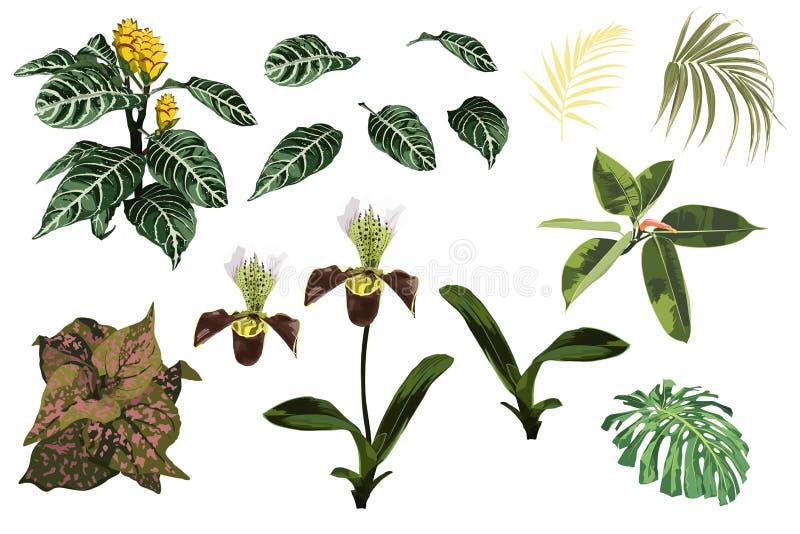Η τροπική ορχιδέα ζουγκλών ανθίζει, εξωτικό κίτρινο φυτό, τροπικά φύλλα φοινικών και σύνολο φυτών διανυσματική απεικόνιση
