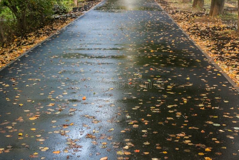 Η υγρή ασφαλτωμένη διάβαση πεζών, που καλύφθηκε με τα φύλλα φθινοπώρου στοκ εικόνες με δικαίωμα ελεύθερης χρήσης